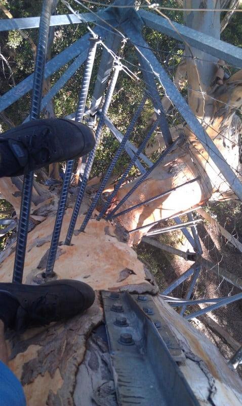 gloucester-tree-climb-ladder