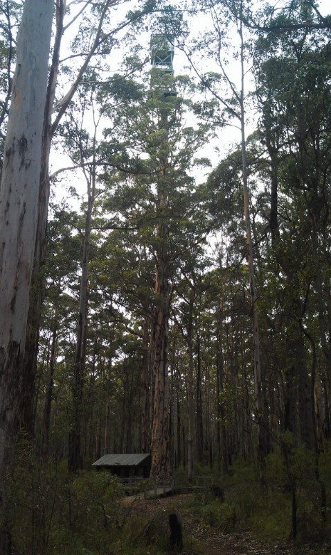 diamond-tree-firetower